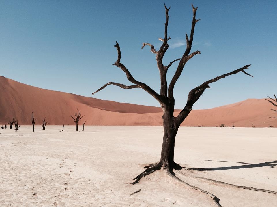 Foto Namib Wüste