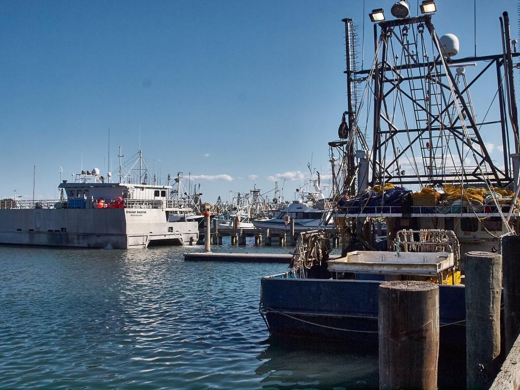 Im Fischereihafen von Mooloolaba