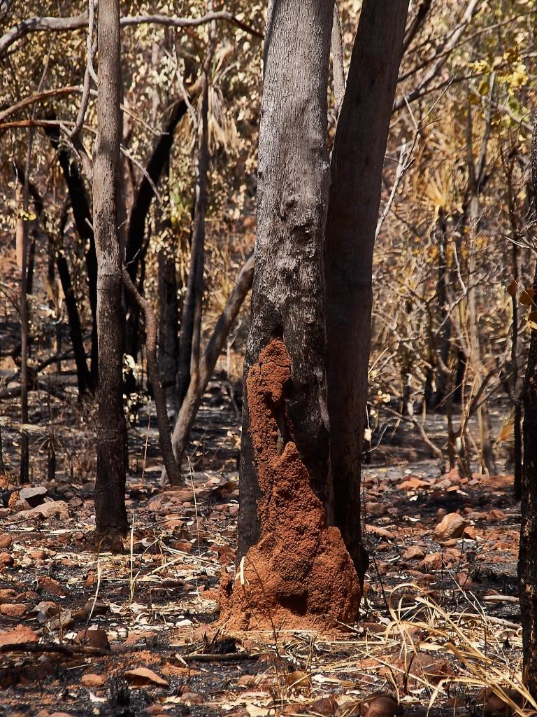 Die Termiten überstehen das Feuer unbeschadet.