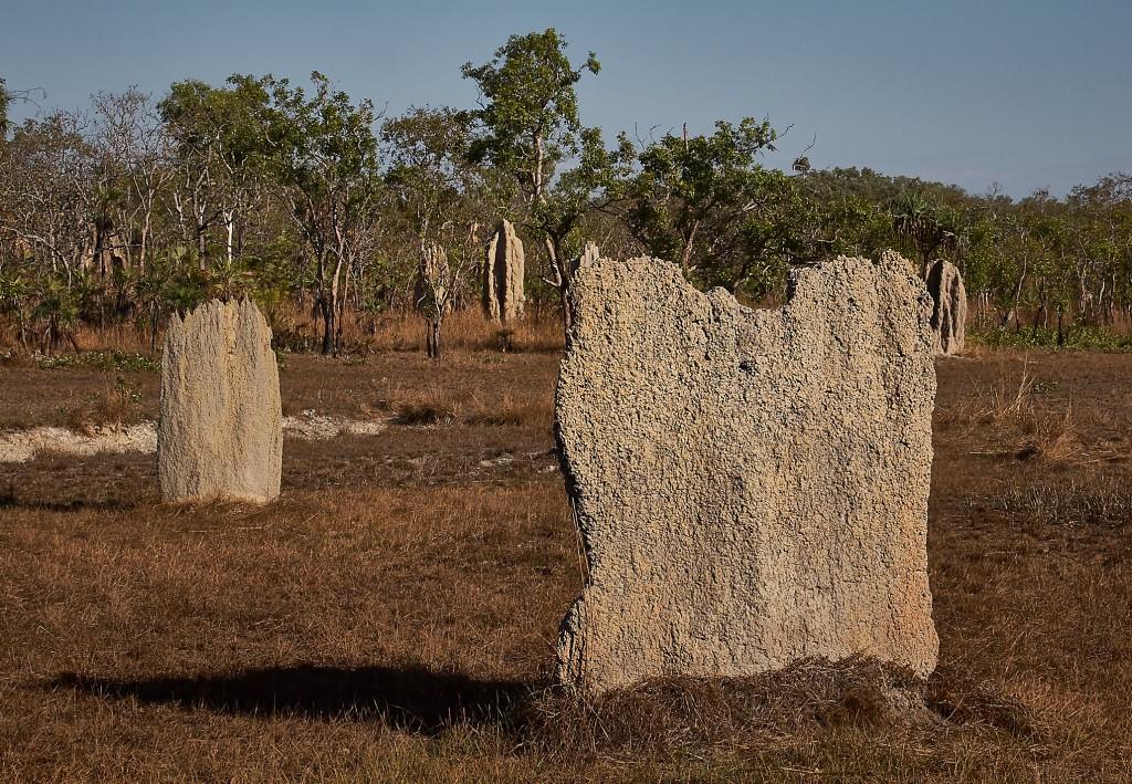 Ganze Felder von Termitenbauten in unterschiedlicher Größe und Form, abhängig vom Standort.